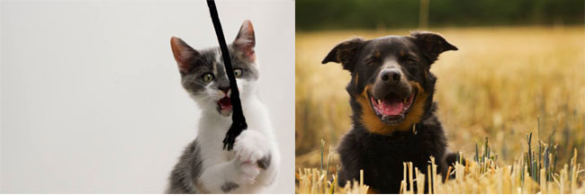 Donate a car to help cats. Dogs to be rescued with help of car donations.