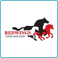 Find out more about donating your car to Redwings Horse Sanctuary