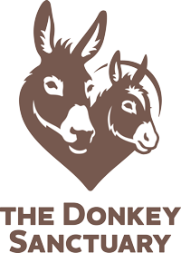 Charity Car Partner The Donkey Sanctuary