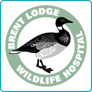 Find out more about donating your car to Brent Lodge Wildlife Hospital